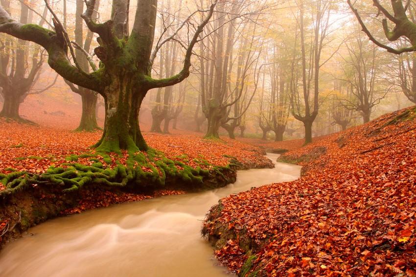 Bosque de Otzarreta - España