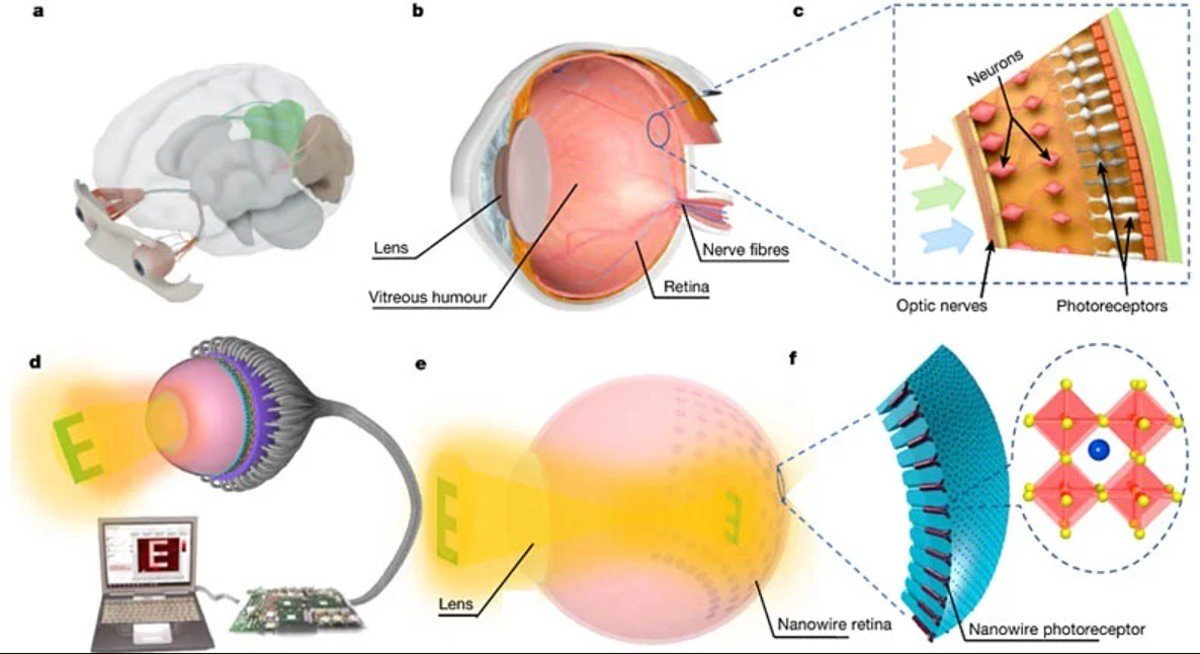 Ojo biónico emulando retina