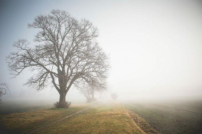 field-fog-foggy-grass