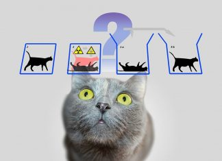 physics-schrodinger-s-cat-schrodinger-quantum-mechanics