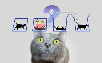 physics-schrodinger-s-cat-schrodinger-quantum-mechanics