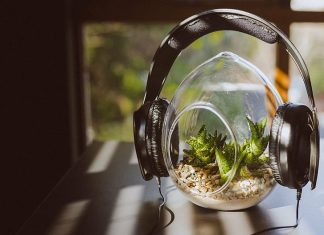 headphones-peaceful-plant-green