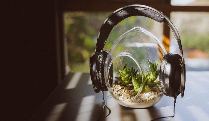 headphones-peaceful-plant-green