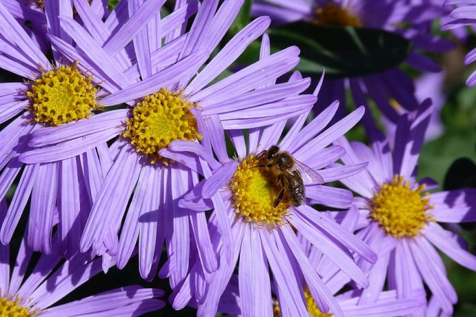 nature-flowers-bee-pollinator-garden-natural