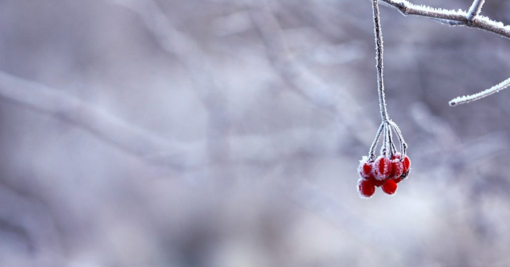 Los mitos de la COVID-19 - El mito del frío y la nieve