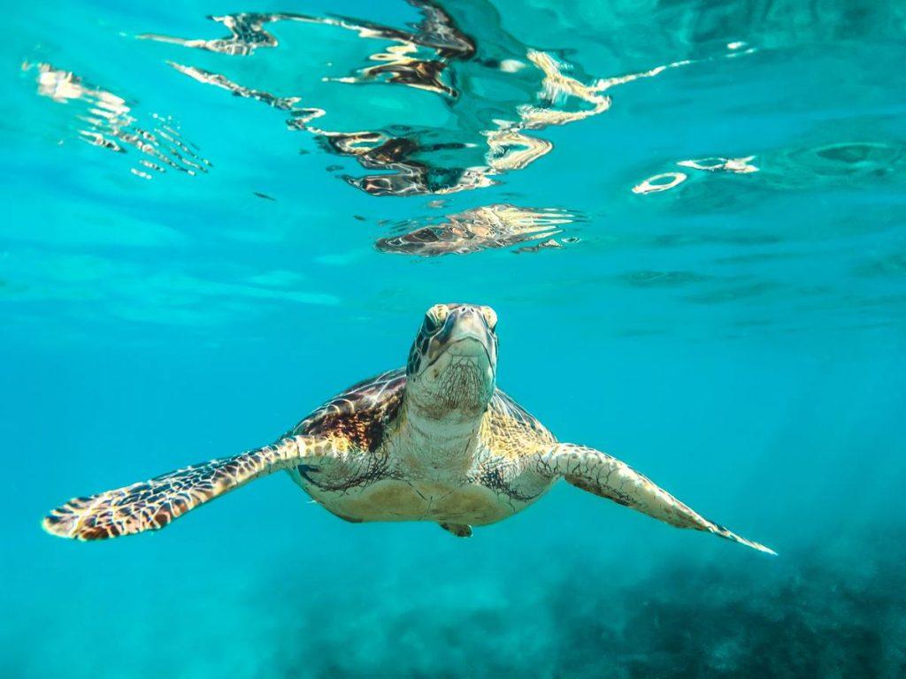Los antepasados de las tortugas.