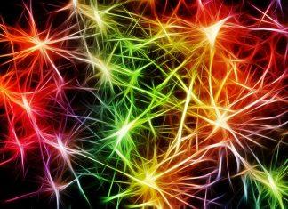 nerves-cells-star-dendrites-sepia