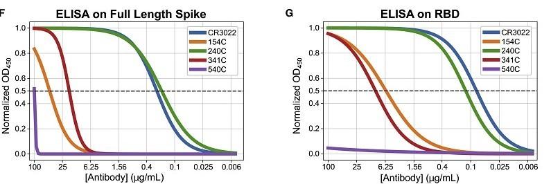Cell Reports - Caracterización bioquímica de los anticuerpos del SARS-CoV por su reactividad cruzada con las proteínas del SARS-CoV-2