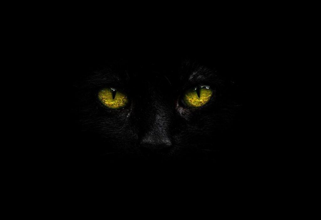 Los gatos de Ulthar – Lovecraft
