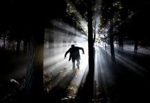 dark-night-light-trees