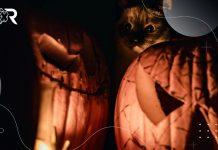 Relatos para darle la bienvenida al otoño y a los gatos misteriosos.