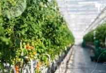 GRoW, ¡El robot autónomo que cultiva tomates! Robots autónomos